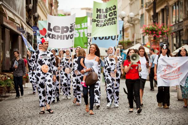 Centrem Prahy tento týden procházely nespokojené evropské kravičky, které hlasitě bučely za lepší životní podmínky